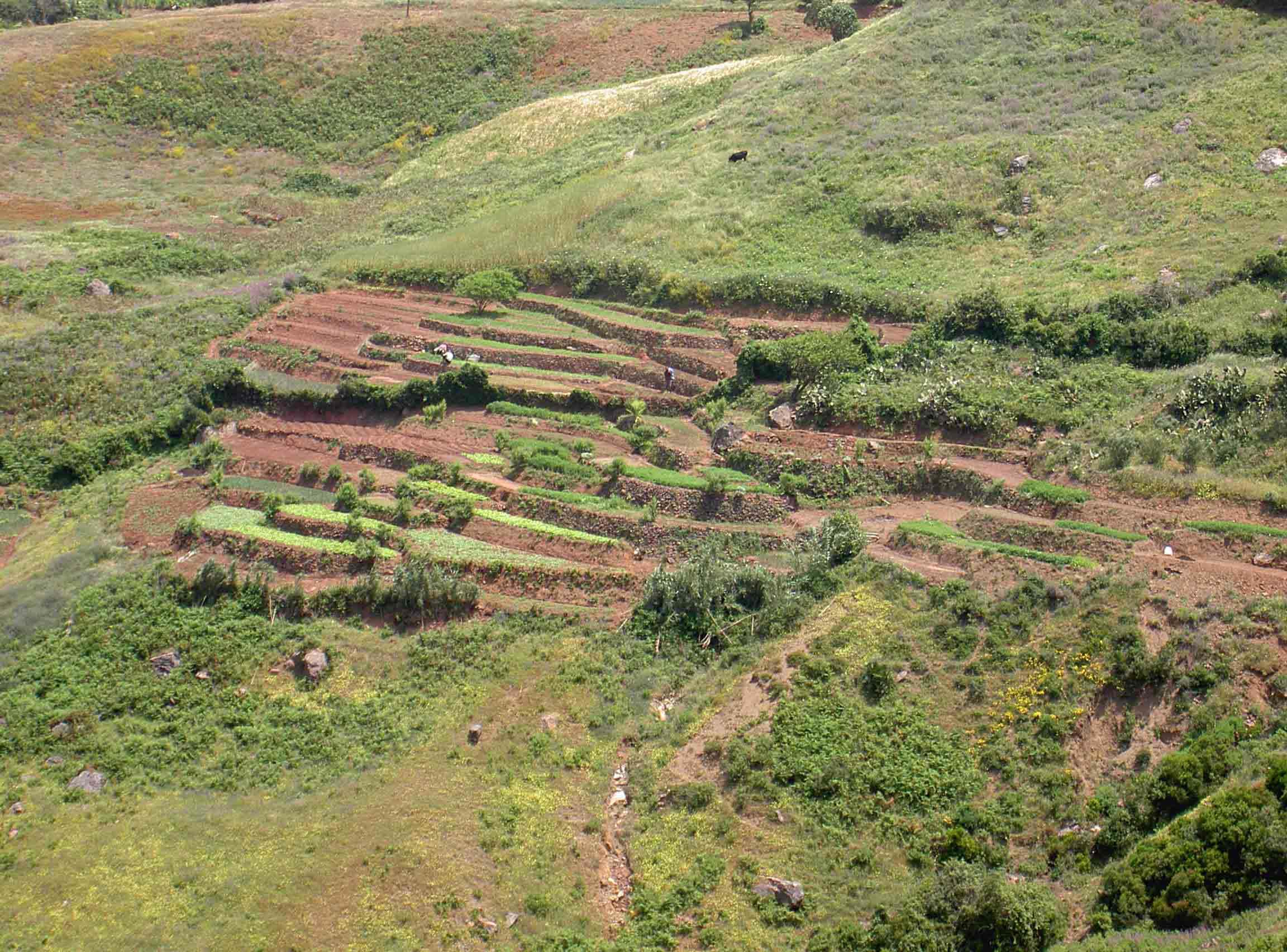 Las terrazas es la mejor forma de sembrar en terrenos inclinados